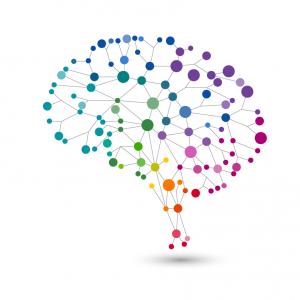 afbeelding brein